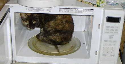 microwave_cat.jpg